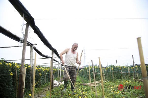 Làng trồng hoa nổi tiếng ở Hà Nội ế ẩm, dân khóc ròng cắt hoa vứt đầy ruộng - Ảnh 2.