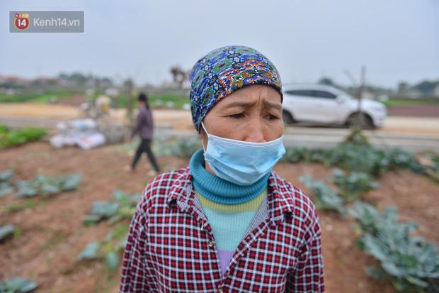 Nước mắt sau Tết: Người nông dân nhổ bỏ cải bắp, su hào vì ế không bán được - Ảnh 16.