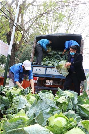 Hỗ trợ tiêu thụ nông sản ứ đọng tại Hải Phòng  - Ảnh 1.