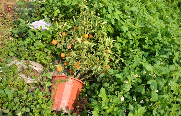Ảnh: Hàng nghìn cây quất bonsai bạc triệu vẫn nằm im ở vườn, nông dân chẳng buồn ra đồng vì ngồi trên đống nợ - Ảnh 7.