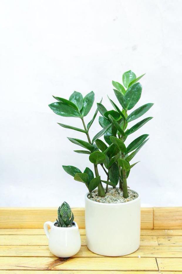 Muốn có tài lộc, may mắn, nhất định phải trồng 8 loại cây này trong nhà - Ảnh 2.