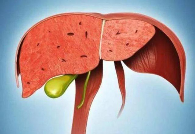Ăn ít 3 ngọt, ăn nhiều 2 đắng, gan của bạn sẽ càng ngày càng khỏe mạnh - Ảnh 1.