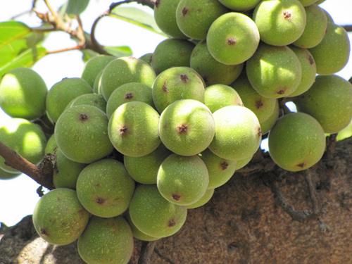 Mâm ngũ quả quen thuộc nhưng không phải ai cũng biết cách bày: Gợi ý 9 loại trái cây may mắn cho một năm mới đủ đầy - Ảnh 3.