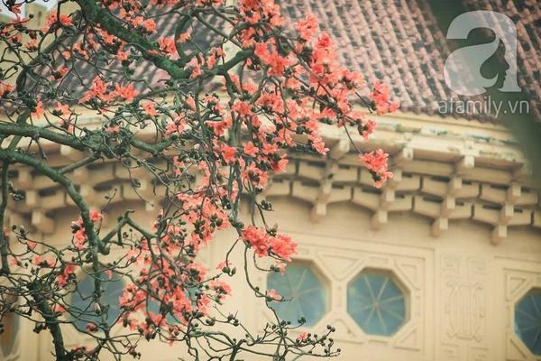 Hoa gạo nở đỏ rực từng khoảng trời: Vừa đẹp vừa ấm áp lại có thể làm thuốc chữa bệnh siêu hay - Ảnh 3.