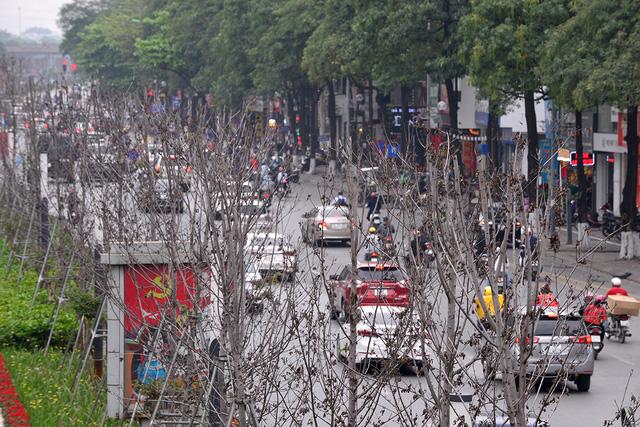 Hà Nội: Hàng cây phong lá đỏ trơ trụi như củi khô - Ảnh 3.