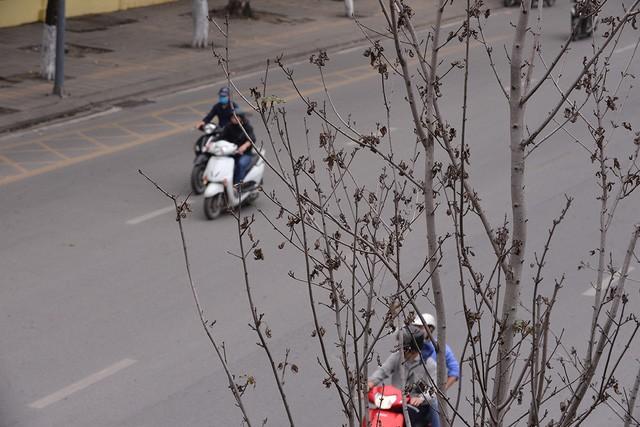 Hà Nội: Hàng cây phong lá đỏ trơ trụi như củi khô - Ảnh 6.
