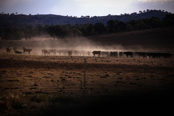 Thịt bò Úc sẽ biến mất khỏi thực đơn trên toàn thế giới vì ... Australia không còn bò? - Ảnh 1.