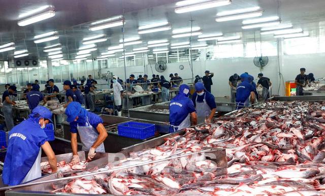 Xuất khẩu cá tra hồi phục nhưng nguồn cung chưa đáp ứng kịp thời - Ảnh 1.