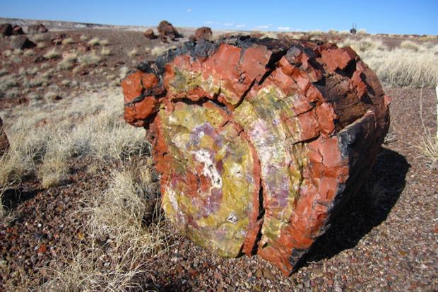 Gỗ hoá thạch là gì, có ý nghĩa phong thuỷ ra sao mà được giới đại gia săn lùng? - Ảnh 1.