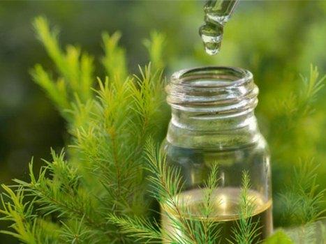 Từ vụ dùng tinh dầu đuổi muỗi khiến 4 người bị ngộ độc: Không cần dùng tinh dầu, 6 cách đơn giản này sẽ đuổi muỗi biến khỏi nhà - Ảnh 1.