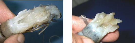 Chuyên gia Nguyễn Duy Thịnh: 10kg tôm có thể bị bơm tới 2kg tạp chất, cách để nhận biết tôm bẩn - Ảnh 8.