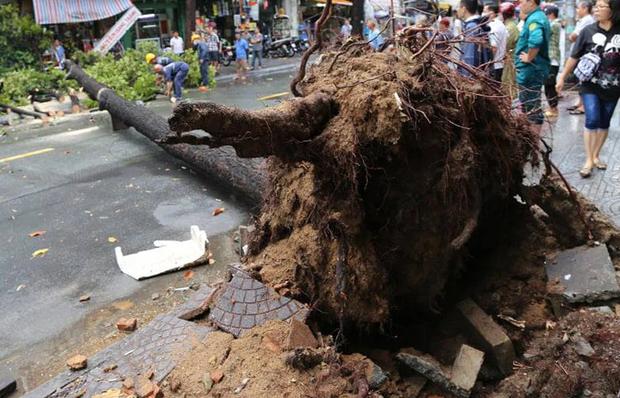 TP.HCM: Cây xanh ngã đổ ra đường, đè trúng tài xế Gojek đang chở khách nữ lưu thông - Ảnh 1.