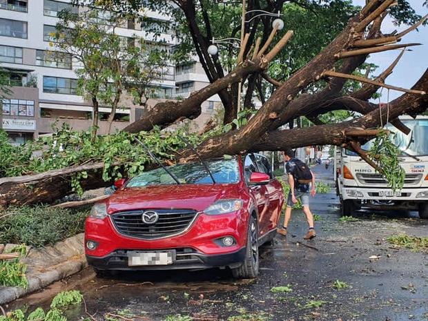 TP.HCM: Cây xanh ngã đổ ra đường, đè trúng tài xế Gojek đang chở khách nữ lưu thông - Ảnh 4.