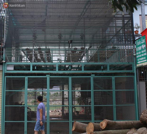 Đồn đoán chủ vườn lan đột biến ở Hà Nội ôm hàng trăm tỷ bỏ trốn: Chủ vườn lan từng làm lái xe 3 bánh - Ảnh 2.