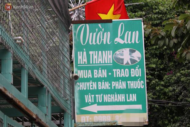 Đồn đoán chủ vườn lan đột biến ở Hà Nội ôm hàng trăm tỷ bỏ trốn: Chủ vườn lan từng làm lái xe 3 bánh - Ảnh 3.