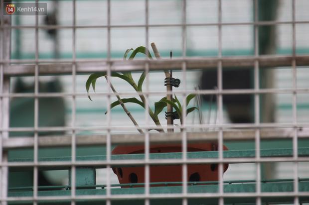 Đồn đoán chủ vườn lan đột biến ở Hà Nội ôm hàng trăm tỷ bỏ trốn: Chủ vườn lan từng làm lái xe 3 bánh - Ảnh 4.