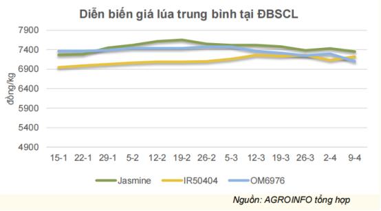 Thị trường xuất khẩu gạo lớn nhất của Việt Nam giảm mạnh - Ảnh 1.