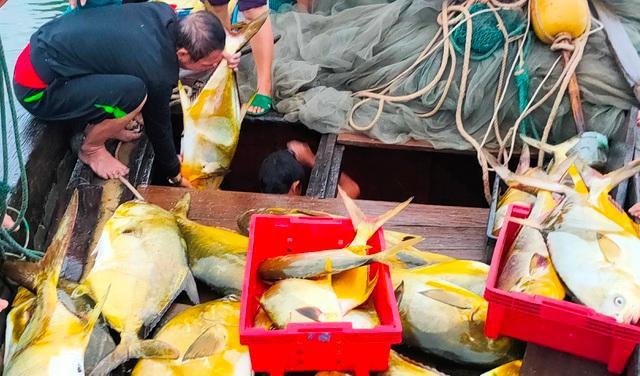 Trúng đậm mẻ cá chim vàng, ngư dân thu hơn nửa tỷ đồng  - Ảnh 2.