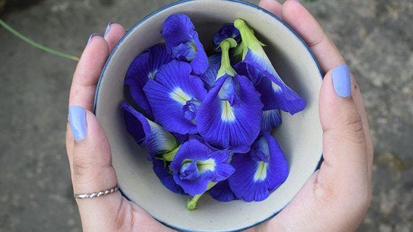 3 mối nguy hiểm khi dùng trà hoa đậu biếc sai cách có thể khiến chúng mất dinh dưỡng, thậm chí rước họa vào thân - Ảnh 1.