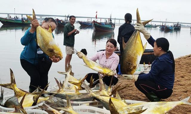 Trúng đậm mẻ cá chim vàng, ngư dân thu hơn nửa tỷ đồng  - Ảnh 3.