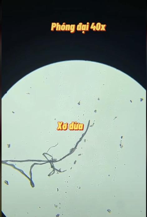"""Kết quả bất ngờ khi soi nước dừa dưới kính hiển vi và thời điểm vàng uống nước dừa trong ngày giúp phụ nữ """"hồi xuân"""", bất chấp hết bệnh tật - Ảnh 3."""