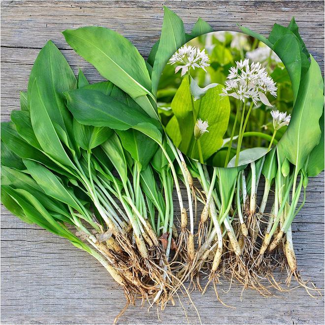 9 loài thực vật luôn khiến con người nhầm lẫn tai hại: Loại thì ăn được, loại lại có độc và cần né xa - Ảnh 6.