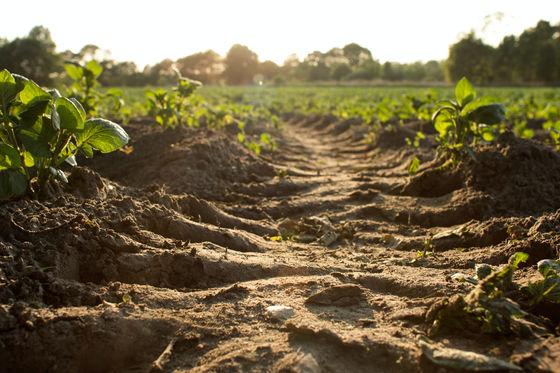 Nông dân khắp thế giới đang chôn quần lót trên đất ruộng, tưởng trò đùa nhưng mục đích phía sau lại vô cùng nghiêm túc - Ảnh 2.