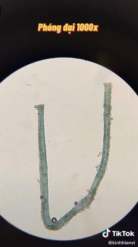 Chuyên gia nói gì về clip sự thật khi soi nước mắm dưới kính hiển vi và 4 lưu ý khi người Việt dùng nước mắm để không ảnh hưởng sức khỏe - Ảnh 3.