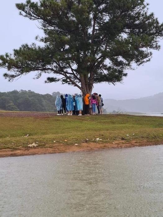 Nhóm du khách trú mưa dưới cây thông cô đơn nổi tiếng ở Đà Lạt, nhưng lại khiến dân mạng lạnh gáy vì lý do này - Ảnh 1.