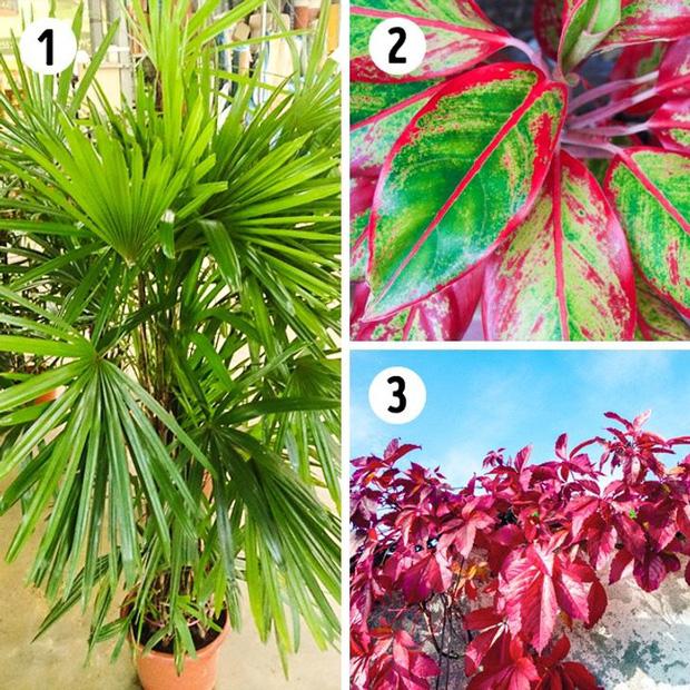 12 loại cây trồng trong nhà phù hợp nhất với từng không gian, lại là máy lọc không khí cực tốt - Ảnh 1.