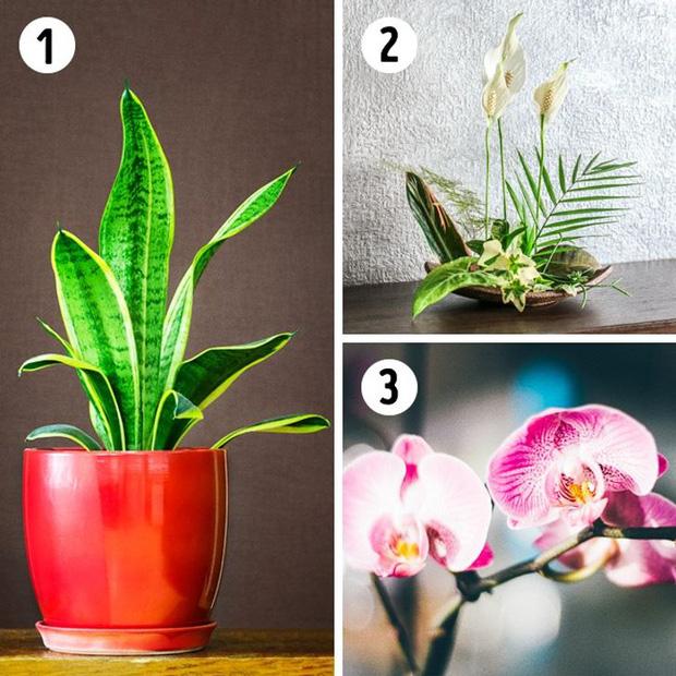 12 loại cây trồng trong nhà phù hợp nhất với từng không gian, lại là máy lọc không khí cực tốt - Ảnh 2.