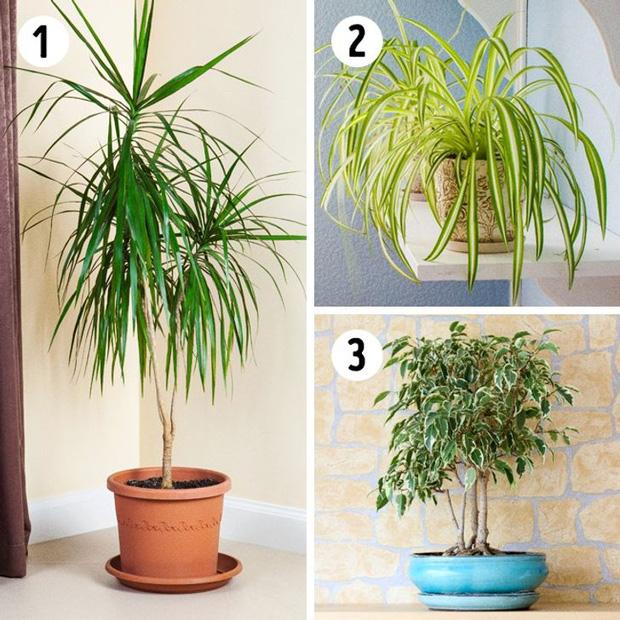 12 loại cây trồng trong nhà phù hợp nhất với từng không gian, lại là máy lọc không khí cực tốt - Ảnh 3.