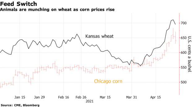 Thức ăn chăn nuôi tăng giá chóng mặt, đến nỗi làm đảo lộn dòng chảy thương mại toàn cầu - Ảnh 1.