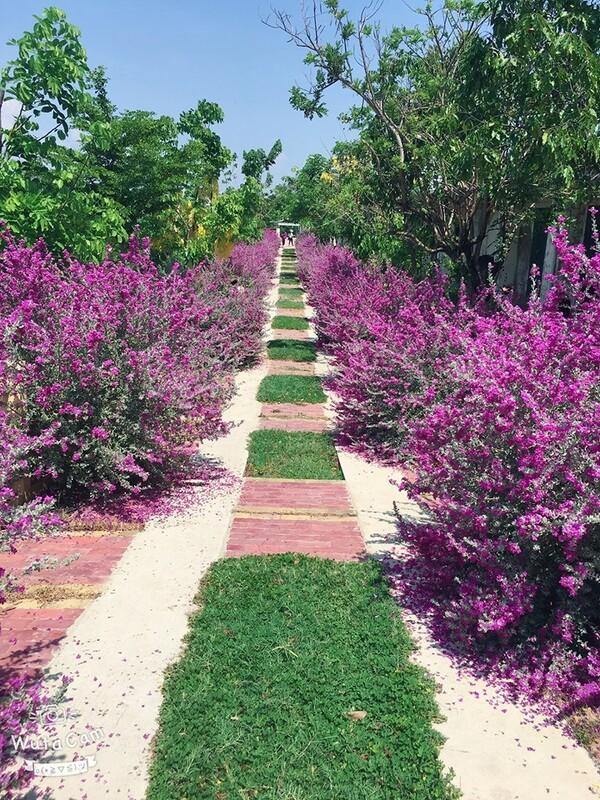 Ngôi trường có khuôn viên đẹp nhất Việt Nam, 4 mùa hoa nở, học phí siêu thấp mà sinh viên đi học ngày nào cũng ngỡ lạc vào resort - Ảnh 13.