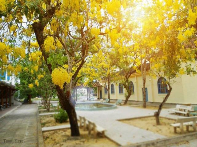 Ngôi trường có khuôn viên đẹp nhất Việt Nam, 4 mùa hoa nở, học phí siêu thấp mà sinh viên đi học ngày nào cũng ngỡ lạc vào resort - Ảnh 10.