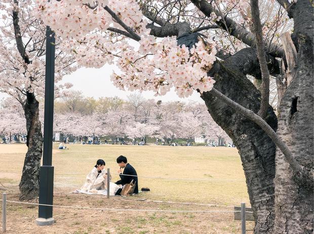 Có một mùa hoa anh đào Nhật Bản đẹp đến tan chảy qua ống kính của du học sinh người Việt: Một khi đã xem thì chẳng thể rời mắt được - Ảnh 12.