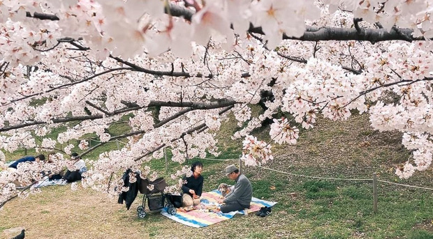 Có một mùa hoa anh đào Nhật Bản đẹp đến tan chảy qua ống kính của du học sinh người Việt: Một khi đã xem thì chẳng thể rời mắt được - Ảnh 13.
