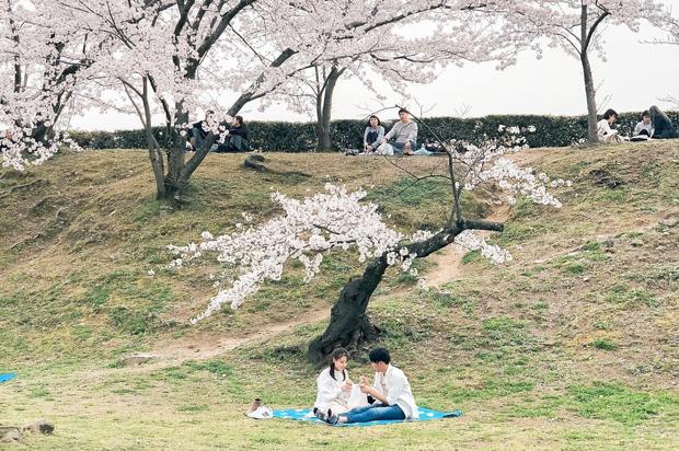 Có một mùa hoa anh đào Nhật Bản đẹp đến tan chảy qua ống kính của du học sinh người Việt: Một khi đã xem thì chẳng thể rời mắt được - Ảnh 15.