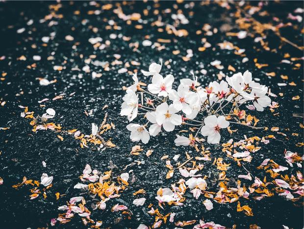 Có một mùa hoa anh đào Nhật Bản đẹp đến tan chảy qua ống kính của du học sinh người Việt: Một khi đã xem thì chẳng thể rời mắt được - Ảnh 10.