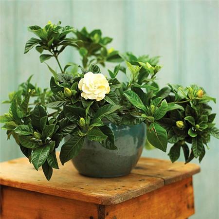 10 loại cây phong thủy tốt nhất cho phòng ngủ vì khả năng lọc không khí, giúp gia chủ phát tài lộc - Ảnh 7.