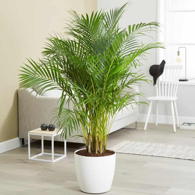 10 loại cây phong thủy tốt nhất cho phòng ngủ vì khả năng lọc không khí, giúp gia chủ phát tài lộc - Ảnh 9.