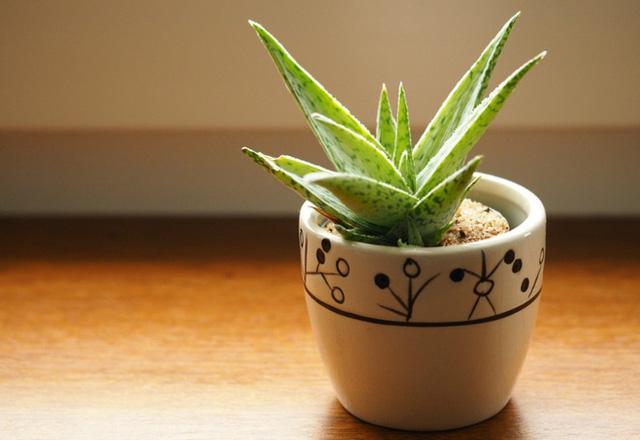 10 loại cây phong thủy tốt nhất cho phòng ngủ vì khả năng lọc không khí, giúp gia chủ phát tài lộc - Ảnh 10.