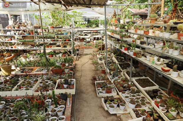 Hoa mắt với vườn xương rồng hơn 10.000 cây của chú Phúc miền Tây: Có loại sống đến năm 30 tuổi mới ra hoa rồi chết - Ảnh 20.