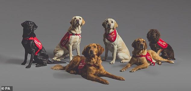 Biệt đội chó săn Covid-19: Kết quả đáng kinh ngạc, phát hiện virus nhanh hơn test nhanh - Ảnh 3.