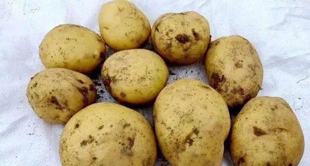 3 loại khoai tây chớ nên mua và 3 lưu ý khi ăn nó, đừng dại mà mắc phải kẻo mang bệnh vào người - Ảnh 1.