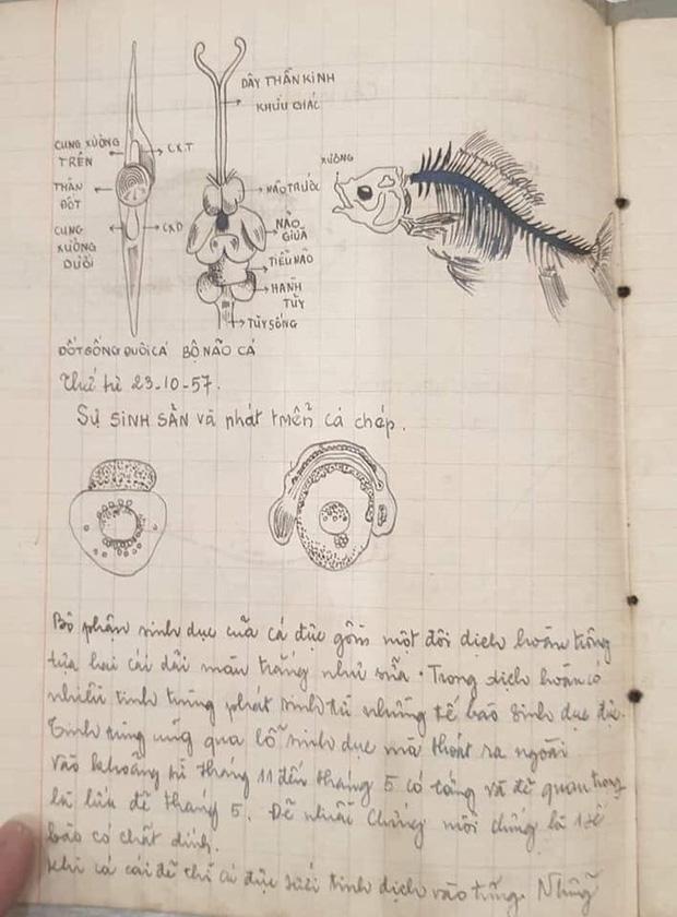 Cuốn vở Sinh học cách đây 64 năm: Ghi chép siêu nghệ thuật, hình vẽ đẹp mê hồn khiến học trò trỗi dậy động lực học hành! - Ảnh 4.