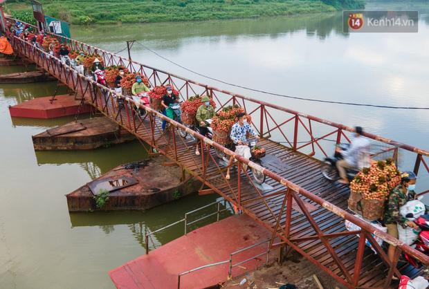 Bắc Giang: Kiếm tiền triệu từ việc đẩy xe chở vải lên dốc cầu phao trong mùa thu hoạch - Ảnh 1.