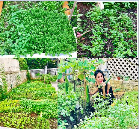 Khu vườn 100m2 xanh tươi của Thủy Tiên - Công Vinh trong biệt thự ở khu nhà giàu: Đầy rau trái xum xuê, ai cũng mơ ước! - Ảnh 11.