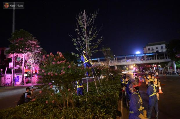 Ảnh: Di dời hàng cây phong lá đỏ trên 2 tuyến phố Hà Nội ngay trong đêm - Ảnh 1.