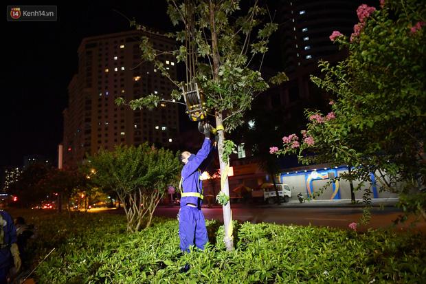 Ảnh: Di dời hàng cây phong lá đỏ trên 2 tuyến phố Hà Nội ngay trong đêm - Ảnh 7.